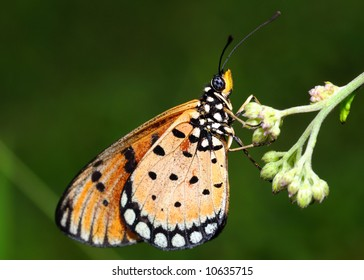 Butterfly resting on a flower