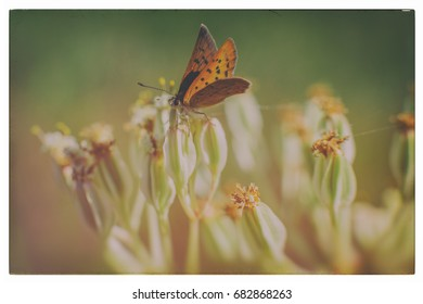 A butterfly resting on a milkweed plant.