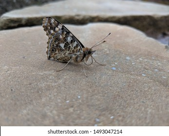 butterfly resting on a stone