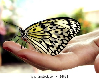 Butterfly resting on woman's hand