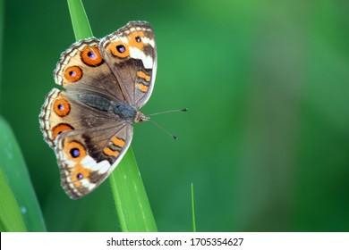 a butterfly with round motif wings that are perched on a green branch. a beautiful view by the lake
