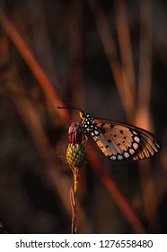 Butterfly settling in for the day right before sunset. The golden light enhancing the beauty of the butterfly before meeting oblivion.