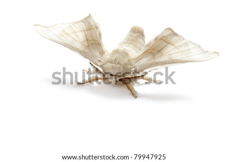 Butterfly Silkworm Silk Worm Isolated On Stock Photo (Edit Now ... b05e81ebd7e