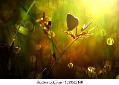 Butterfly sit on the grass, dreamy background, bokeh, backlight