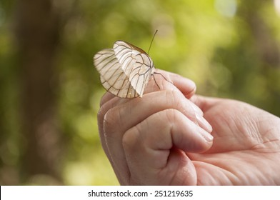 Butterfly sits on the arm