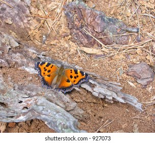 The butterfly sits on a bark of a tree in a wood