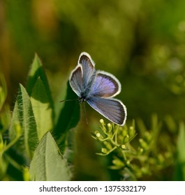 butterfly sits on a flower in the grass. Spring meadow. Web banner.