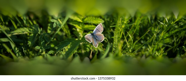 butterfly sits on a flower in the grass. Spring meadow.