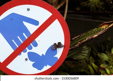 A butterfly sits on a warning sign saying not to touch butterflies