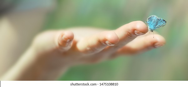 Butterfly sits on a woman hand on a blurred background. Magical Butterfly close up butterfly wings are folded  Harmony of nature. Macro.