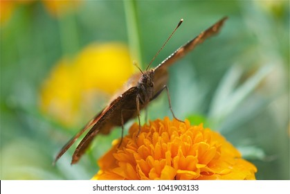 a butterfly sits on a yellow flower