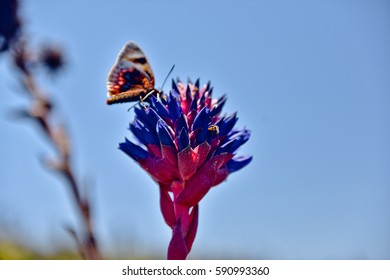Butterfly sitting on amazing flower. Beautiful wild nature in national park with different kind of cactuses and bushes, Chile