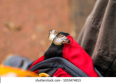 Butterfly sitting on a backpack
