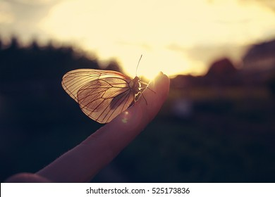 Butterfly sitting on a finger at sunset