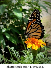Butterfly sitting on a Flower