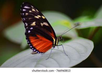 butterfly sitting on a leave