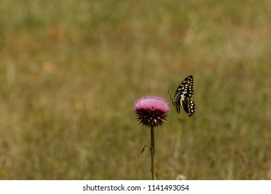 Butterfly sitting on a purple flower in the field