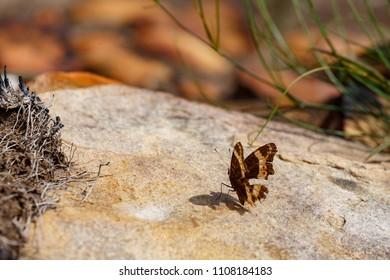 Butterfly sitting on a rock in Van Stadens Wildflower Reserve