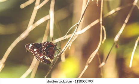 A butterfly sitting on a small branch