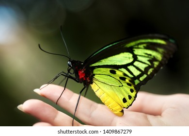 Butterfly sitting on womam hand outdoor in nature.