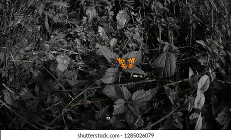 butterfly Small tortoiseshell highlighted relative background as a call to preserve nature