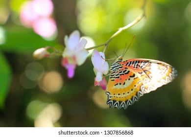 Butterfly souring nectar 2