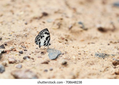 Butterfly standing on soil ground in  national park, Sakaeo, Thailand.