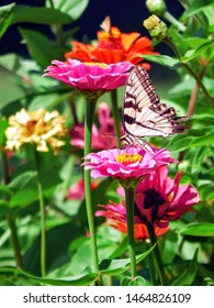 butterfly stops to smell the flowers in a missouri flower garden