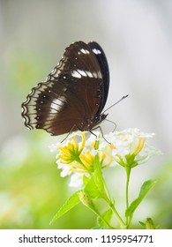 Butterfly is sucking in flowers, blurred background.