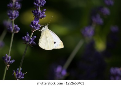 Butterfly in the summer
