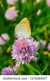 Butterfly in a sunny day on the spring purple flower