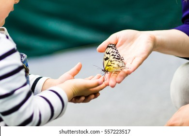 Butterfly, swallowtail, at the hands of a child