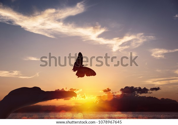 Butterfly takes flight from a human hand