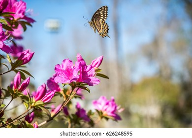 Butterfly taking off from flower