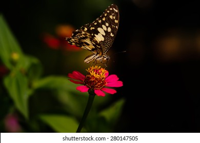 Butterfly of Thailand in sunny day.