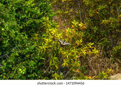 Butterfly in Topanga Canyon, Los Angeles