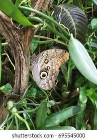 Butterfly in a tree.