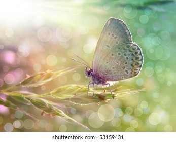 Butterfly under the sunshine