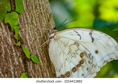 Butterfly in white on the tree