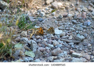 Butterfly in wild environment in the field