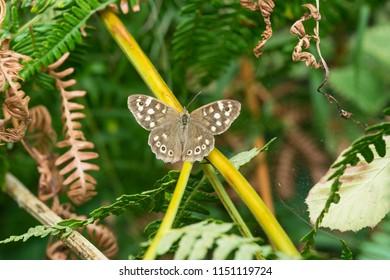 Butterfly in a wild meadow