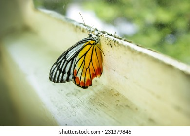 Butterfly at window edge