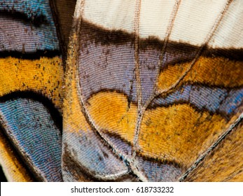 """""""Butterfly wing close-up"""" Abstract macro shot of a section of butterfly wing."""