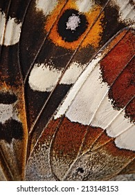 Butterfly wing detail