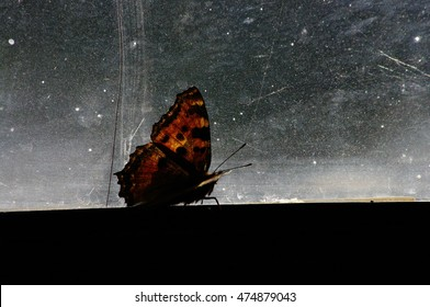 Butterfly wings detail on a window. Art photo