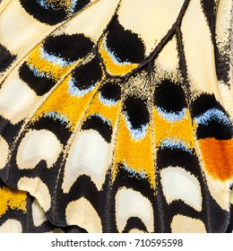 Butterfly wings texture, close up of wings of Lime butterfly or Lemon butterfly (Papilio demoleus) showing minute scales