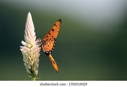 Butterfly wings that are still intact look perfectly beautiful. Natural scenery at the start of a beautiful day