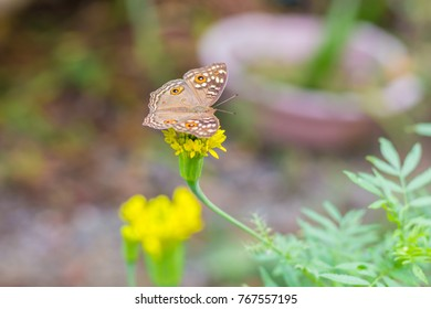 Butterfly with yellow flowers