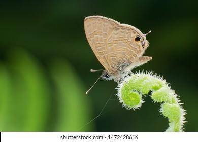 Butterfly(Arthropoda: Insecta: Lepidoptera). On plant. In Hengshan,Hsinchu,Taiwan.