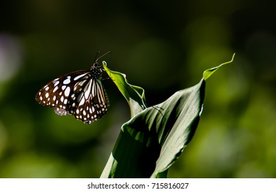 butterfly(mavelikara kerala india)